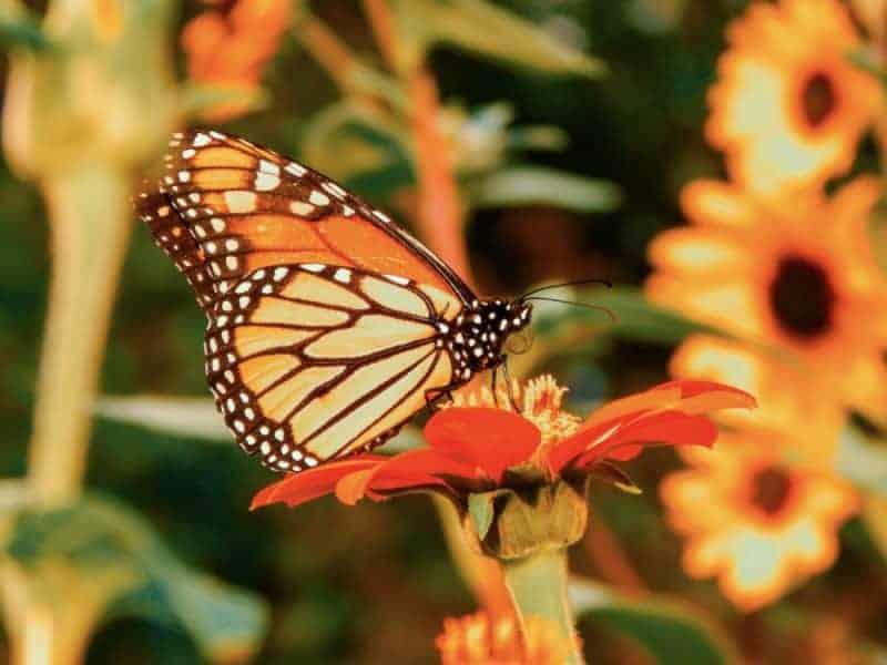 Beverly E Smith Butterfly & Hummingbird Garden