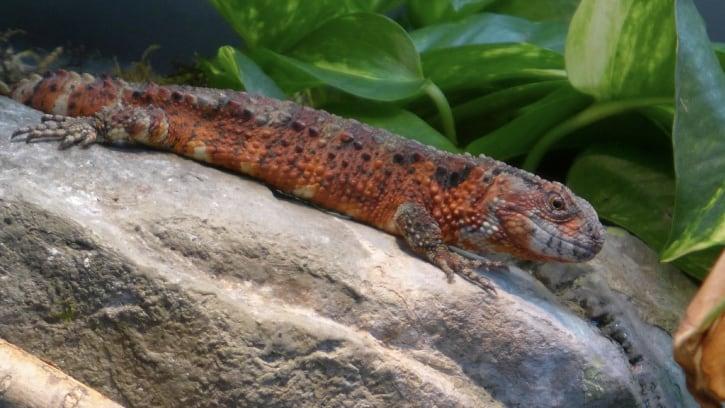Hudson Highlands Nature Museum Wildlife Education Center