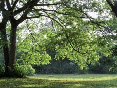 Emeline Park